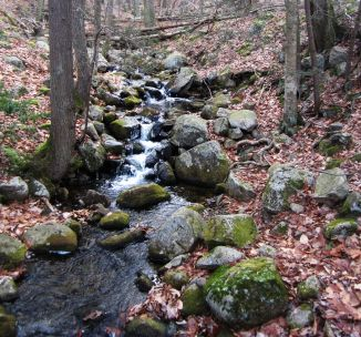 Harriman State Park in New York State.  30 miles (48 km) north of New York City.