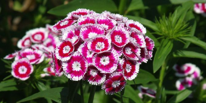 Macro flower photos - Wave Hill Public Garden